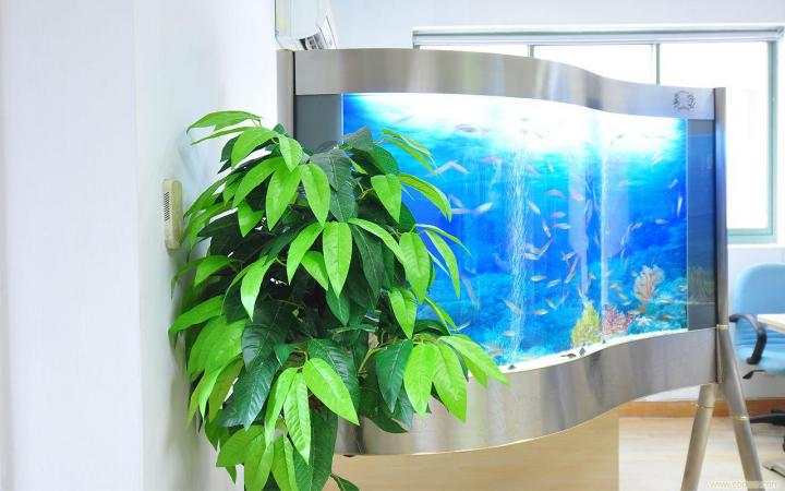 Filtration equipment is essential for aquariums